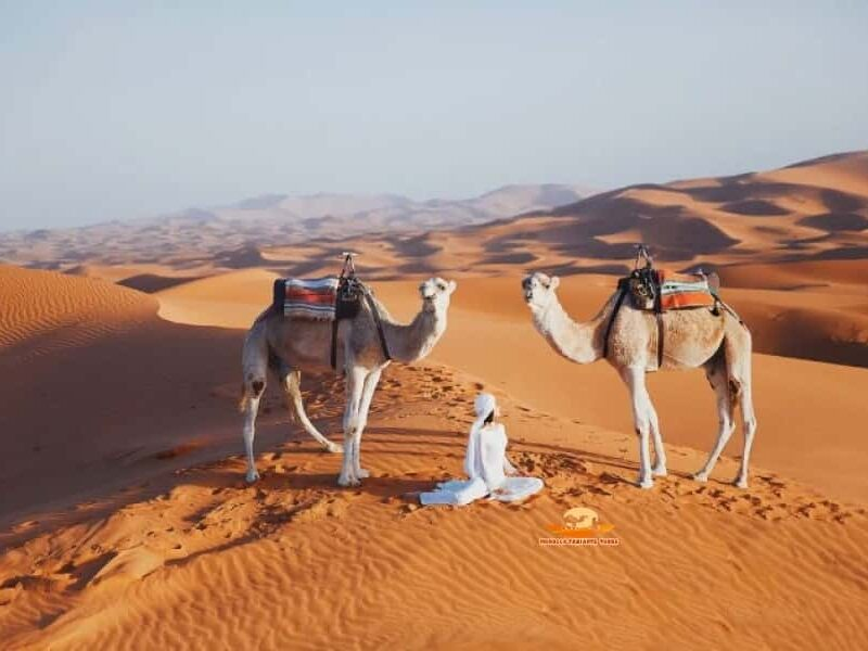 12 day tour of morocco